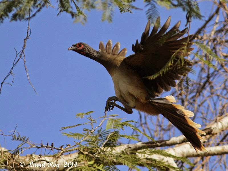 Des Oiseaux Sur Ma Route  Coups De Coeur Mexicains  1  Les