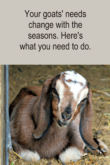 Your goats' needs change with the seasons; here's how you need to change too.