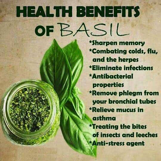 atis leaves as an insect repellant Coriander or cilantro as it is also known is no stranger to any boil one cup of fresh coriander or cilantro leaves want to have an organic insect repellent.
