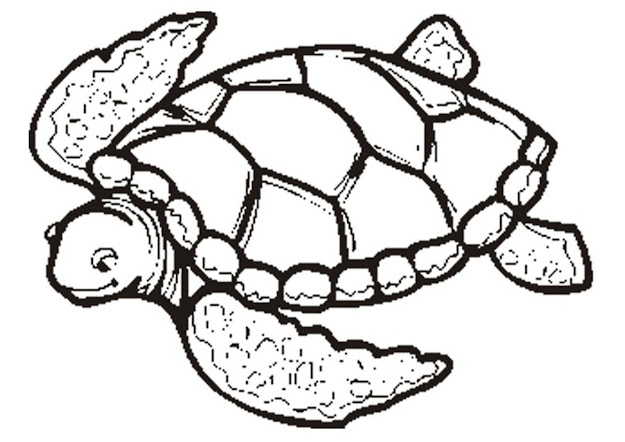 Beautiful Coloring Pages Of Sea Turtles Has Coloring Pages Sea Turtle  Printables