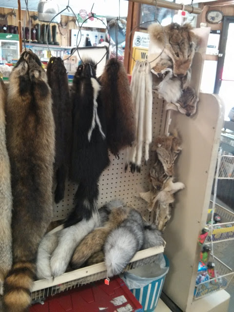 Assorted animal furs and animal tails hanging from wires