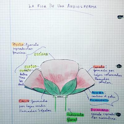 la flor de una angiosperma