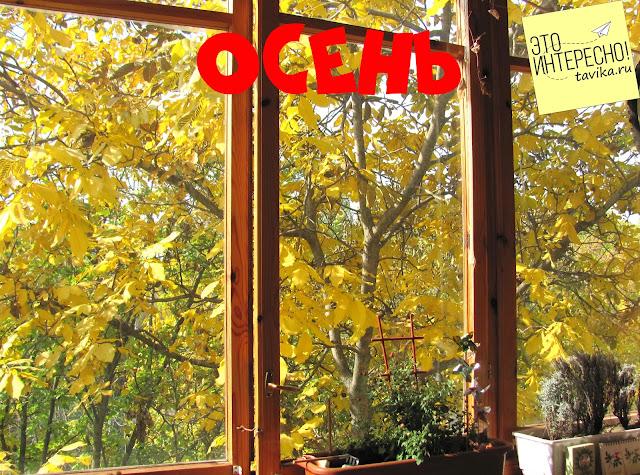 Вид из окна - осень