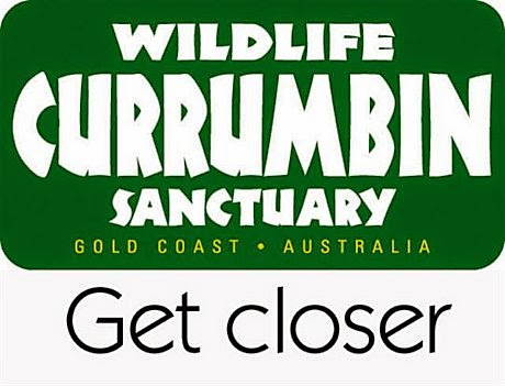 http://stuatthezoo.blogspot.com.au/2013/04/currumbin-wildlife-sanctuary-gold-coast.html