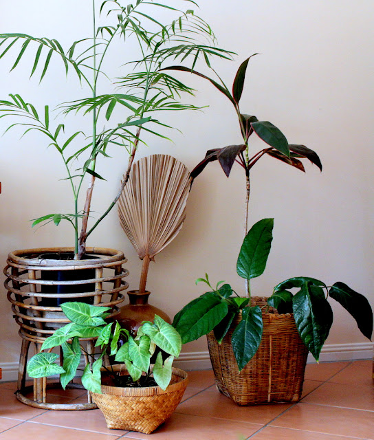 Indoor plants in vintage cane and woven grass baskets