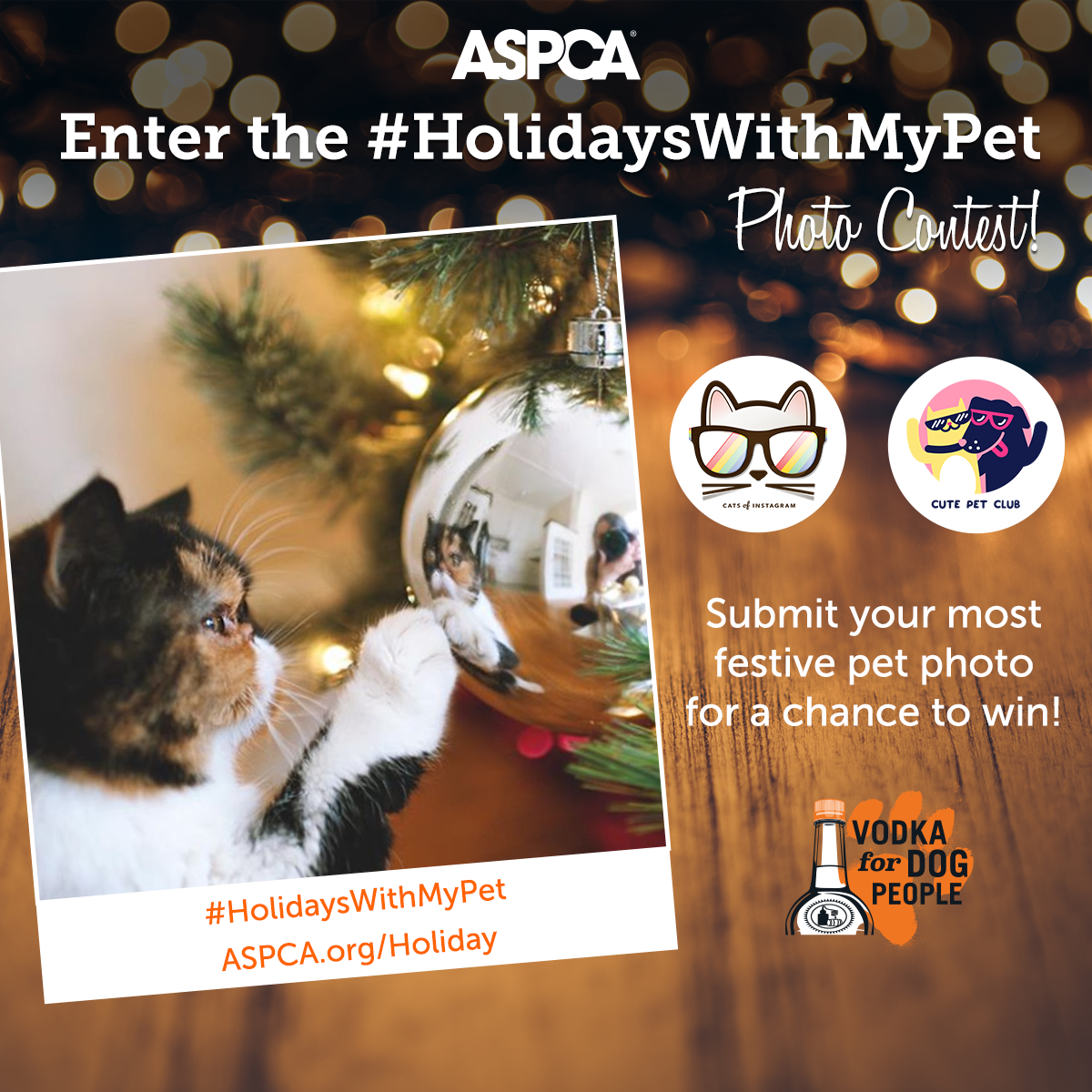 Speedy the cheeky house bunny speedys christmas and holiday and i just found out that the aspca with cats of instagram and cute pet club are holding this fun photo competion m4hsunfo