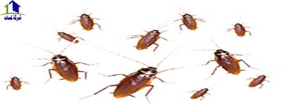 مكافحة الحشرات فى شمال جدة,احياء الشمال
