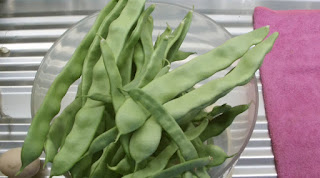 growing beans, haricot beans
