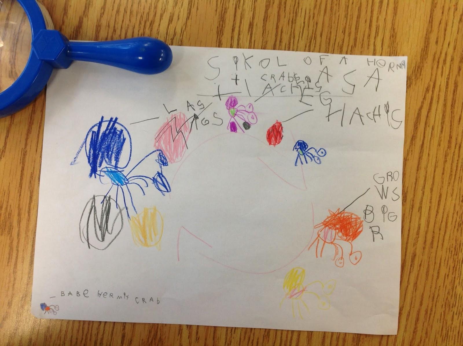 Wonders In Kindergarten Investigating New Wonder