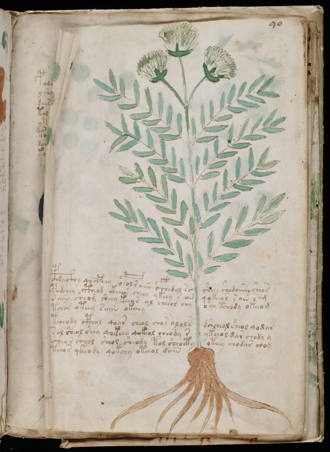 manuscrito163