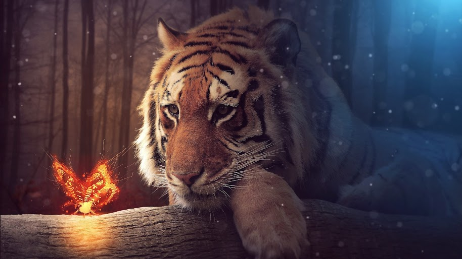 Tiger, Butterfly, 8K, 7680x4320, #47