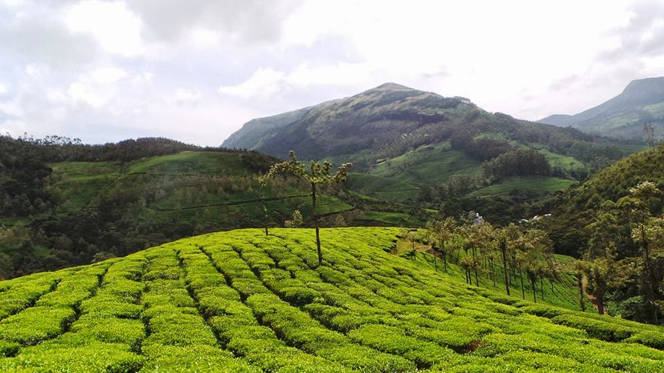 coimbatore munnar road, munnar to coimbatore bus timings, how to go to munnar from coimbatore, how to reach coimbatore from munnar,coimbatore to munnar bus timings, coimbatore to munnar bus service, coimbatore to munnar distance