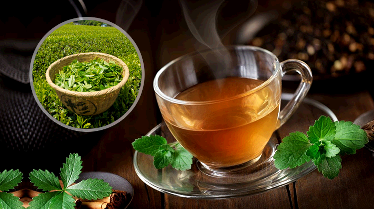 Top Tea Brands in The World