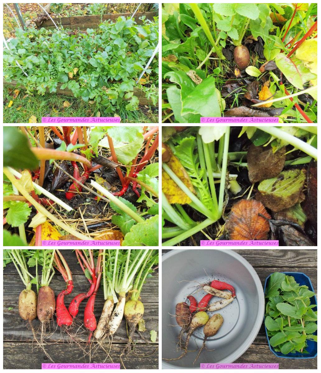Les gourmandes astucieuses cuisine v g tarienne bio saine et gourmande faite maison radis - Radis rose d hiver de chine ...