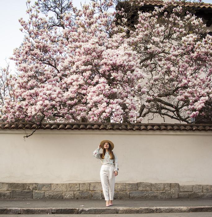 adina nanes printre magnolii