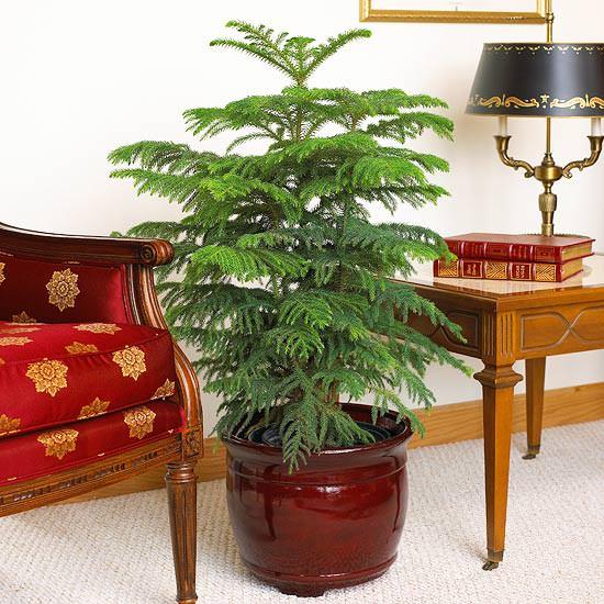 نباتات الزينة: اربع نباتات منزلية سهلة الزراعة ولا تحتاج