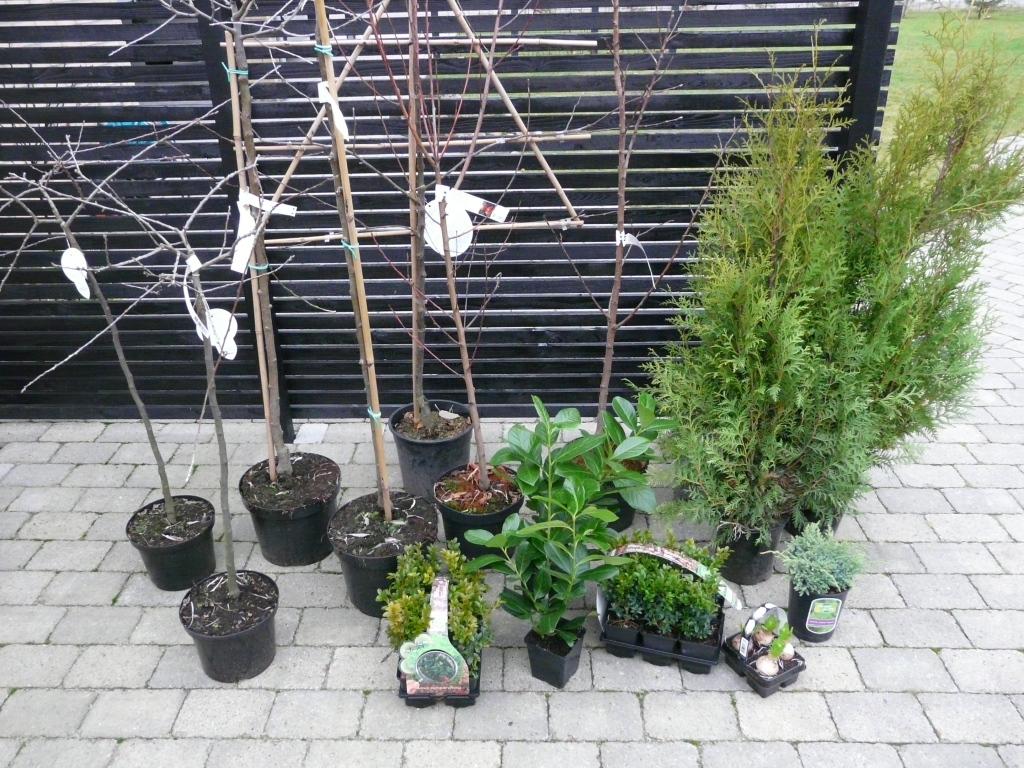 Dybet 27: Tøm et plantecenter...