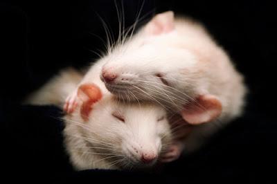 no vivisezione sperimentazione animale adozione
