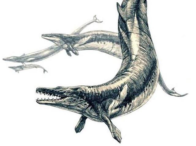 Ikan paus makan paus, ikan paus ganas, paus predator, paus pemakan daging, paus ular, paus raja kadal