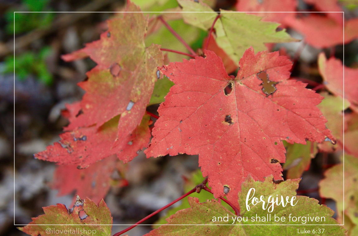 #luke #6:37 #bible #vese #fall #leaves #sunday #photos #quote #faith