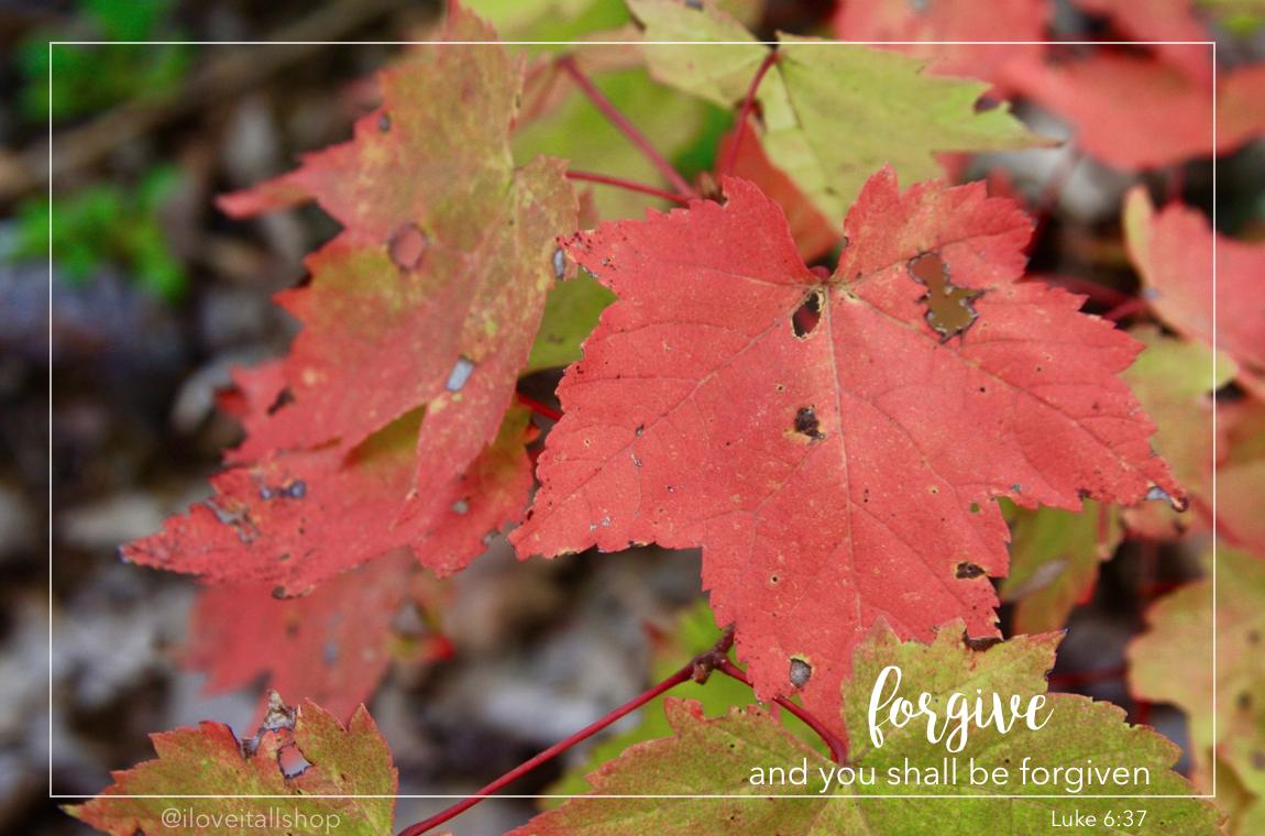 #luke #6:37 #bible #vese #fall #leaves #sunday #photos #quote #faith