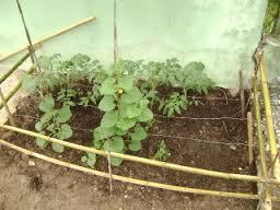 Alimentaci n sana qu se necesita para hacer un huerto for Se necesita jardinero