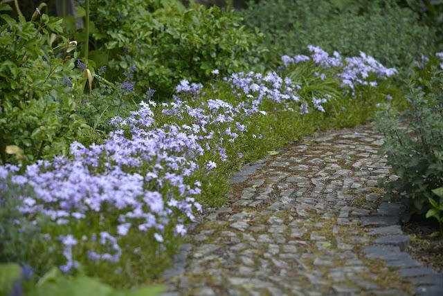Phlox, Gartenweg, Natursteine