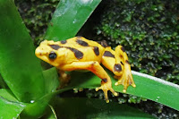 Amazing Frog Facts in Hindi