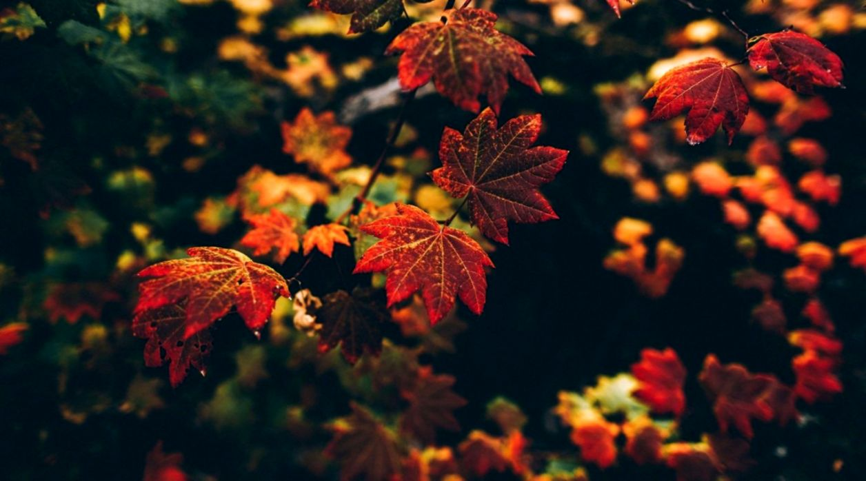 Autumn Leaves Hd Wallpaper Wallpapers Sheet