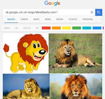 Ciri ciri singa, ciri ciri hewan singa