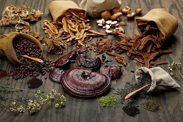 Kết hợp nấm linh chi với các loại thảo dược khác để tăng hiệu quả