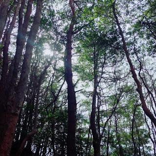 山 森林 森