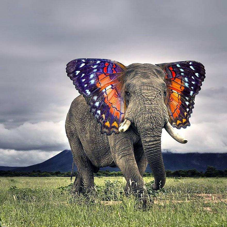 animal-hybrids