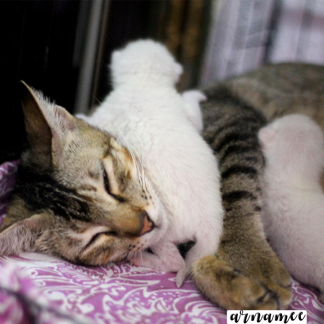 Gambar Kucing Buat Pp Wa godean.web.id