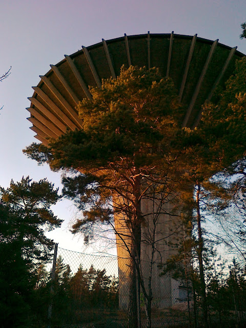 suuri sieni ilta-auringon valossa