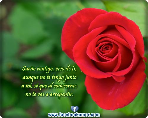 Rosas Rojas Con Frases De Amor: Imagenes De Rosas Lindas