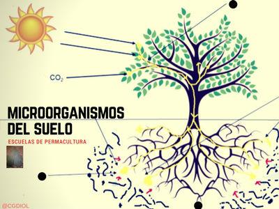 Los microorganismos del suelo son los consumidores de los residuo vegetal