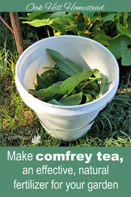 How to make comfrey tea.