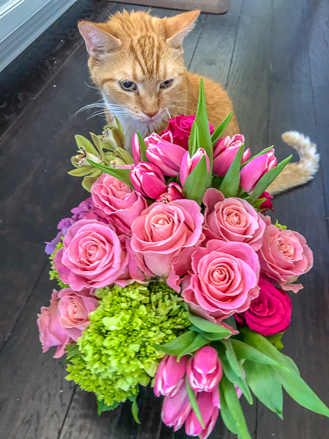cat sitting with flowers