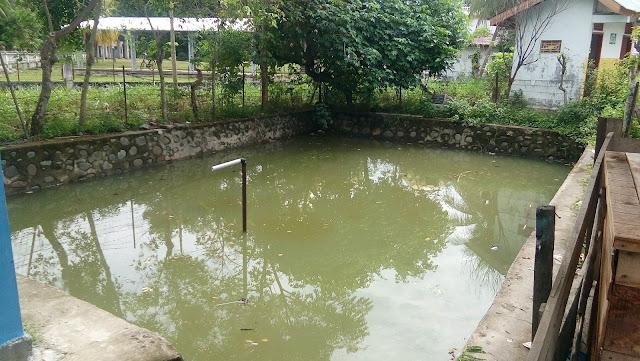 Lewat BUMG, Gampong Jim Kembangkan/Budidayakan Pemeliharaan Ikan Lele
