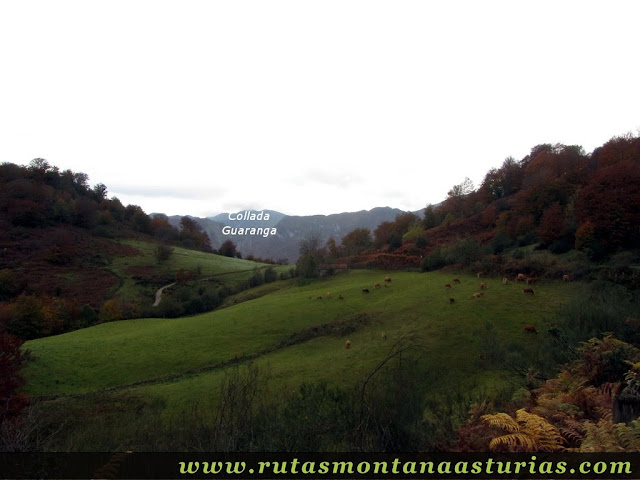 Ruta Bosque de Peloño: llegando a la collada Granceno