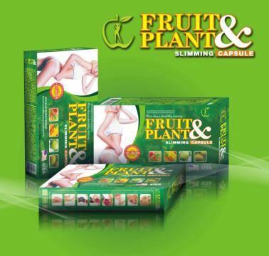 Pelangsing Badan Fruit Plant Herbal