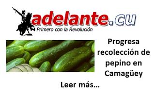 http://www.adelante.cu/index.php/es/noticias/de-camagueey/9687-progresa-recoleccion-de-pepino-en-camagueey