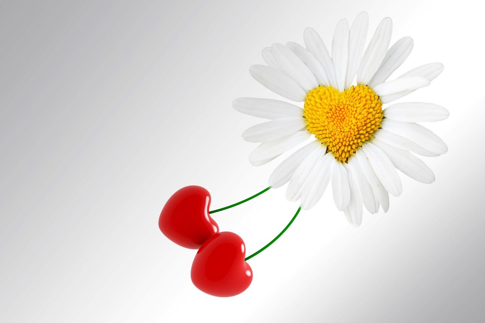 Fondos De Pantalla Gratis San Valentin 16: Descarga Fondos HD: Fondo De Pantalla