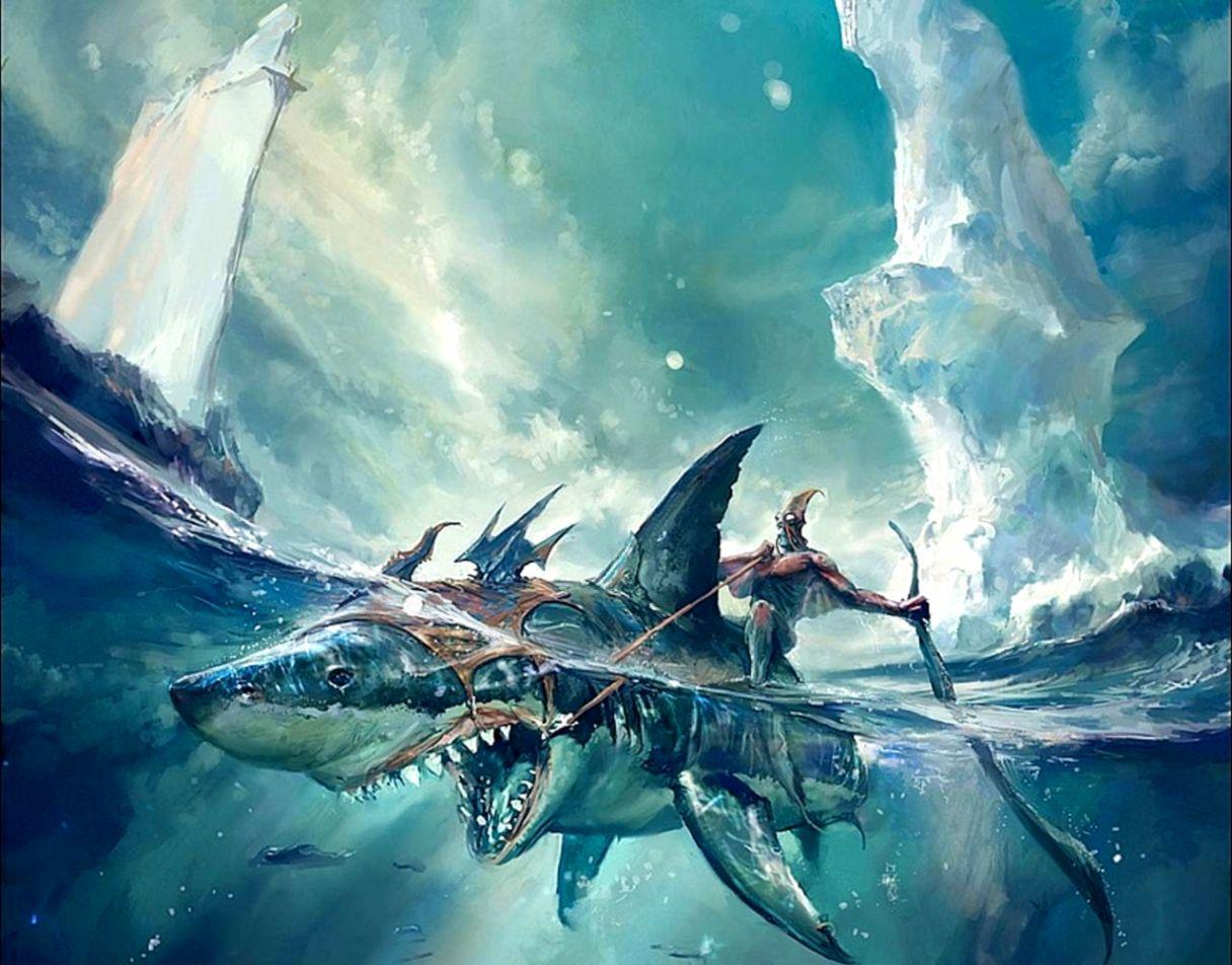 Shark Hd Wallpaper 3d Wallpapers Gallery
