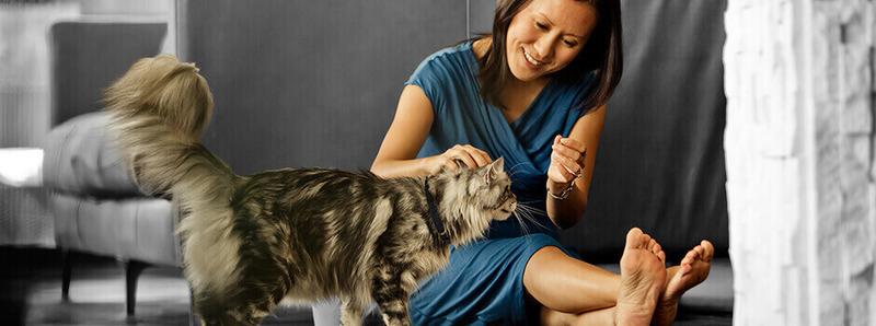 Τι πρέπει να προσέχετε όταν η γάτα είναι έγκυος