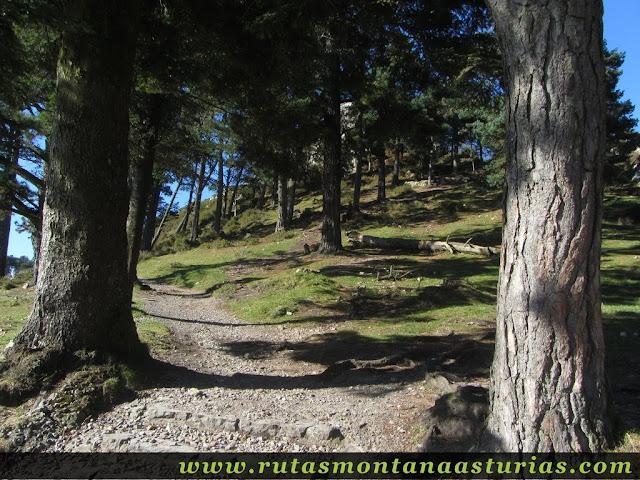 Ruta Pienzu por Mirador Fito y Biescona: Pinar en Mirador del Fito