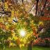 Um dia radiante, feliz e abençoado por Nosso Criador...