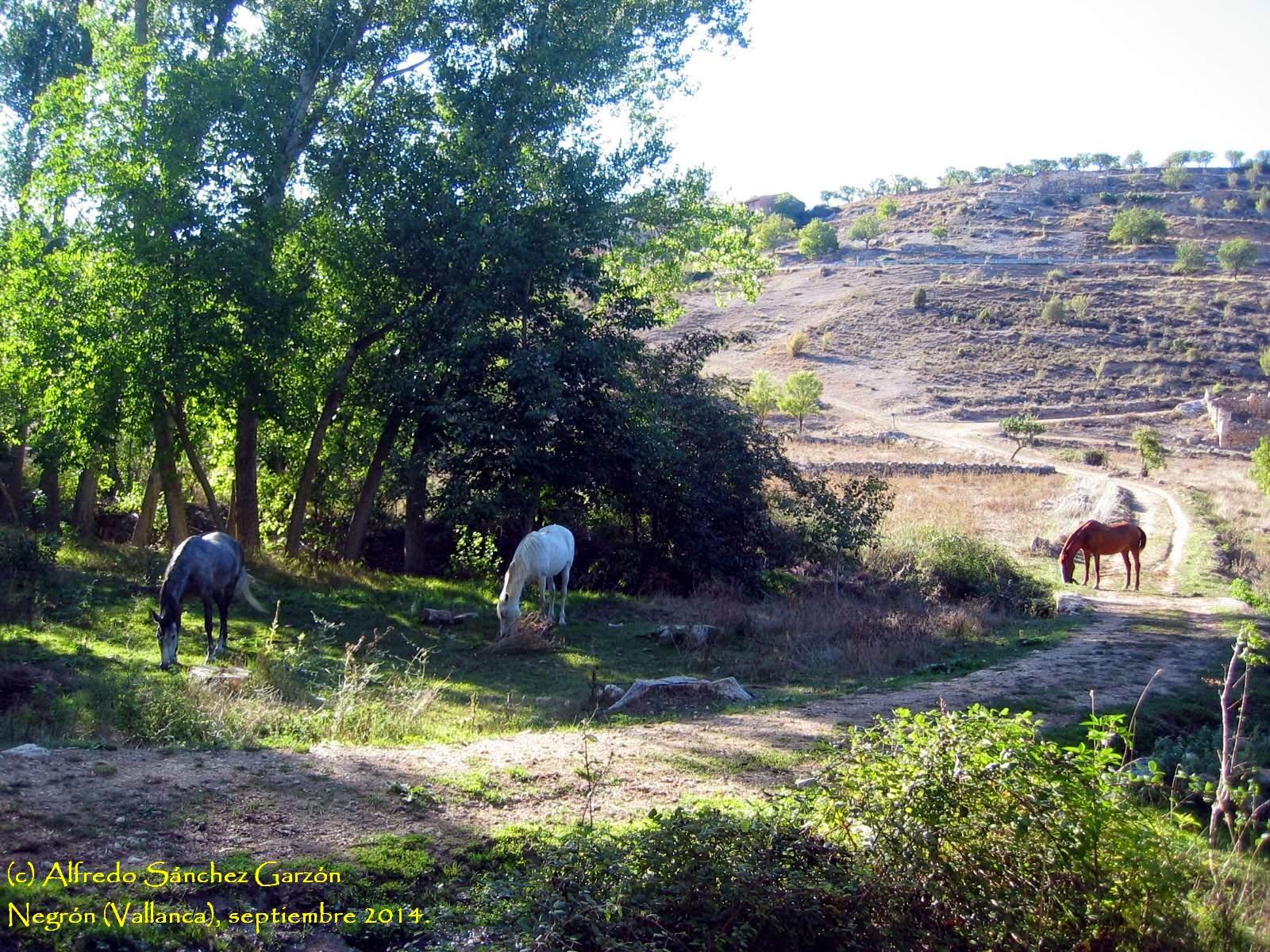 caballos-negron-vallanca-fuente-canalon