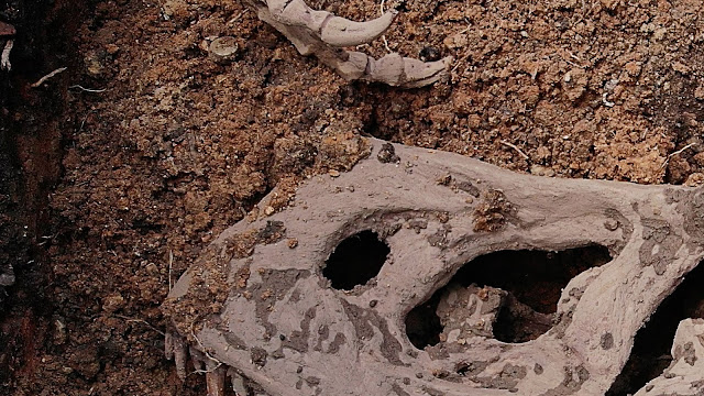 Photos of what seems like a dragon skeleton found in Lagos State